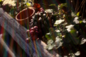 Musea Zutphen, Stedelijk Museum Zutphen, Picture This, Schrijven met Licht, Pinhole Fotografie workshop, Fotozomer Zutphen, World Press Photo Zutphen, Zutphen, Hof van Heeckeren